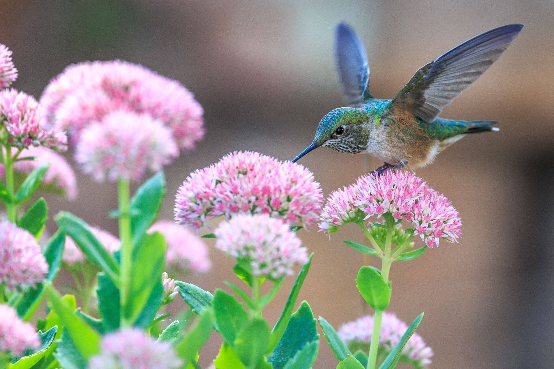 A hummingbird to represent the Balfour Wilson Recruitment logo